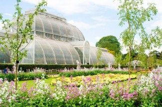 Visit and Cream Tea at Kew Gardens, Surrey.