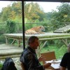 Big Cat Experience: Afternoon Tea with the Tigers