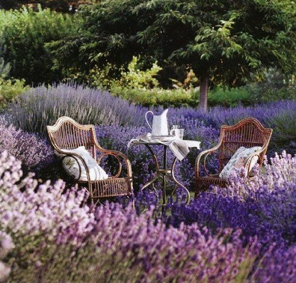 Tea for two in a field of lavender