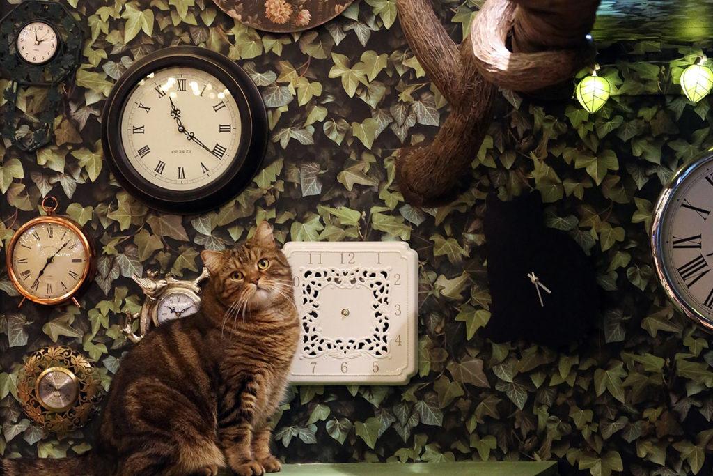 A feline friend at Lady Dinah's Cat Emporium