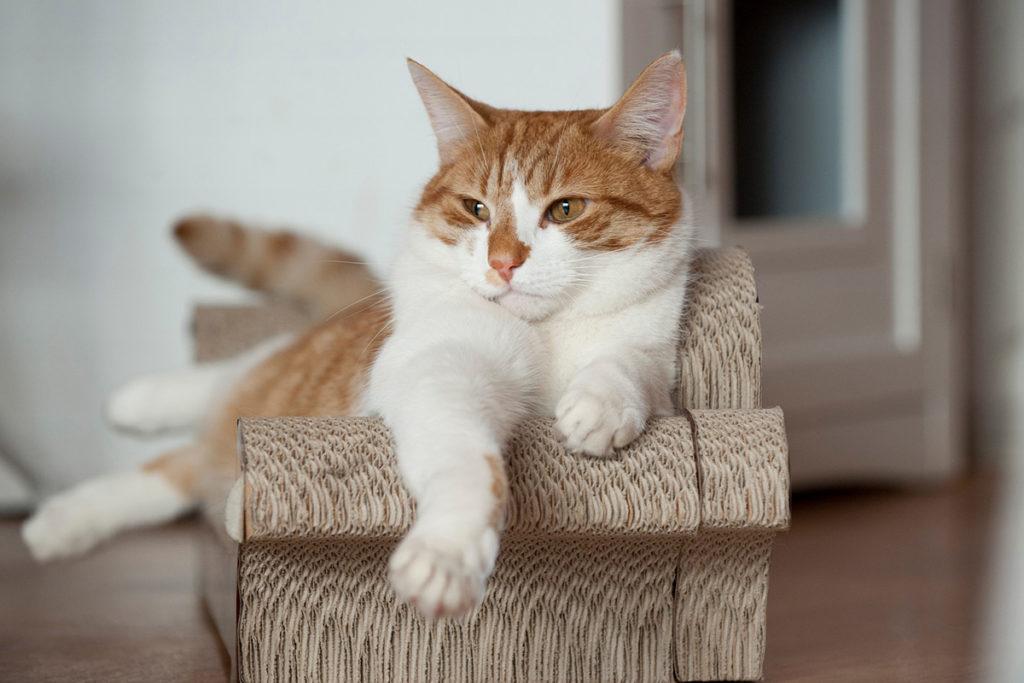 Lady Dinah S Cat Emporium Bethnal Green