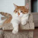 A Lady Dinah Emporium Resident Cat