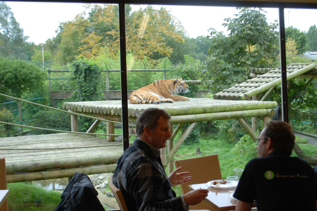 The Big Cat Experience, tea with tigers hertfordshire
