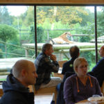 Tea with Tigers at the Bit Cat Experience, Hertfordshire