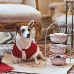 Dog Friendly Afternoon Tea, London, Egerton House Hotel.