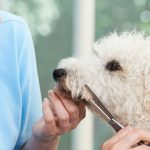 Introduction to Dog Grooming